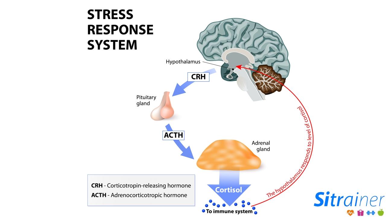 Respuesta stress