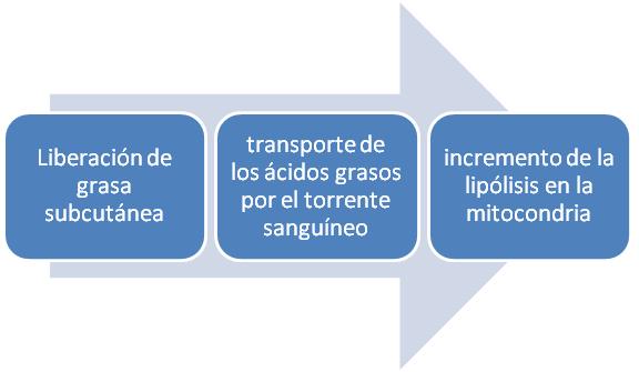 grafico lipolisis