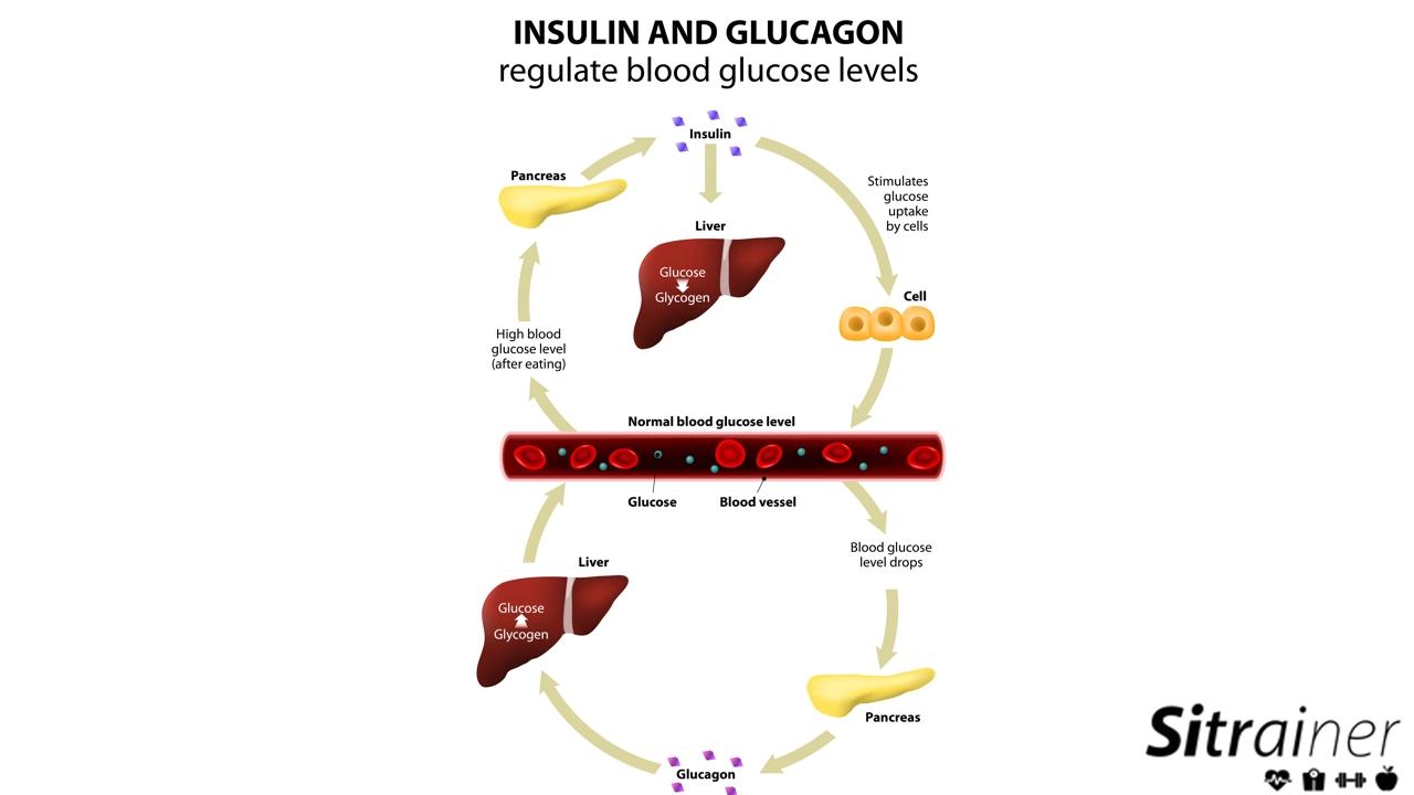 insulina glucagon