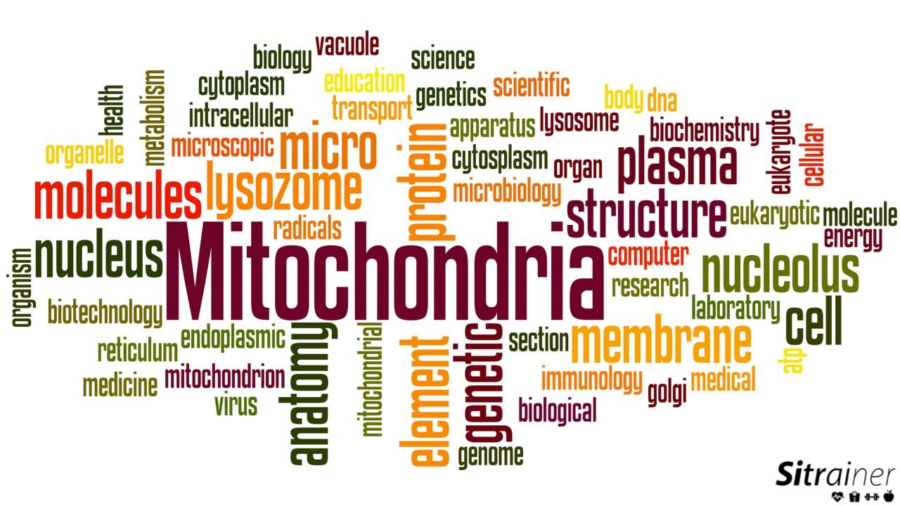 Mejorar el funcionamiento mitocondrial para tener mas energía