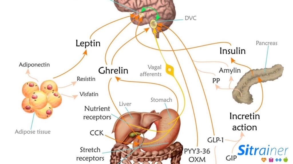 Alteración hormonal por afectar el ciclo del sueño